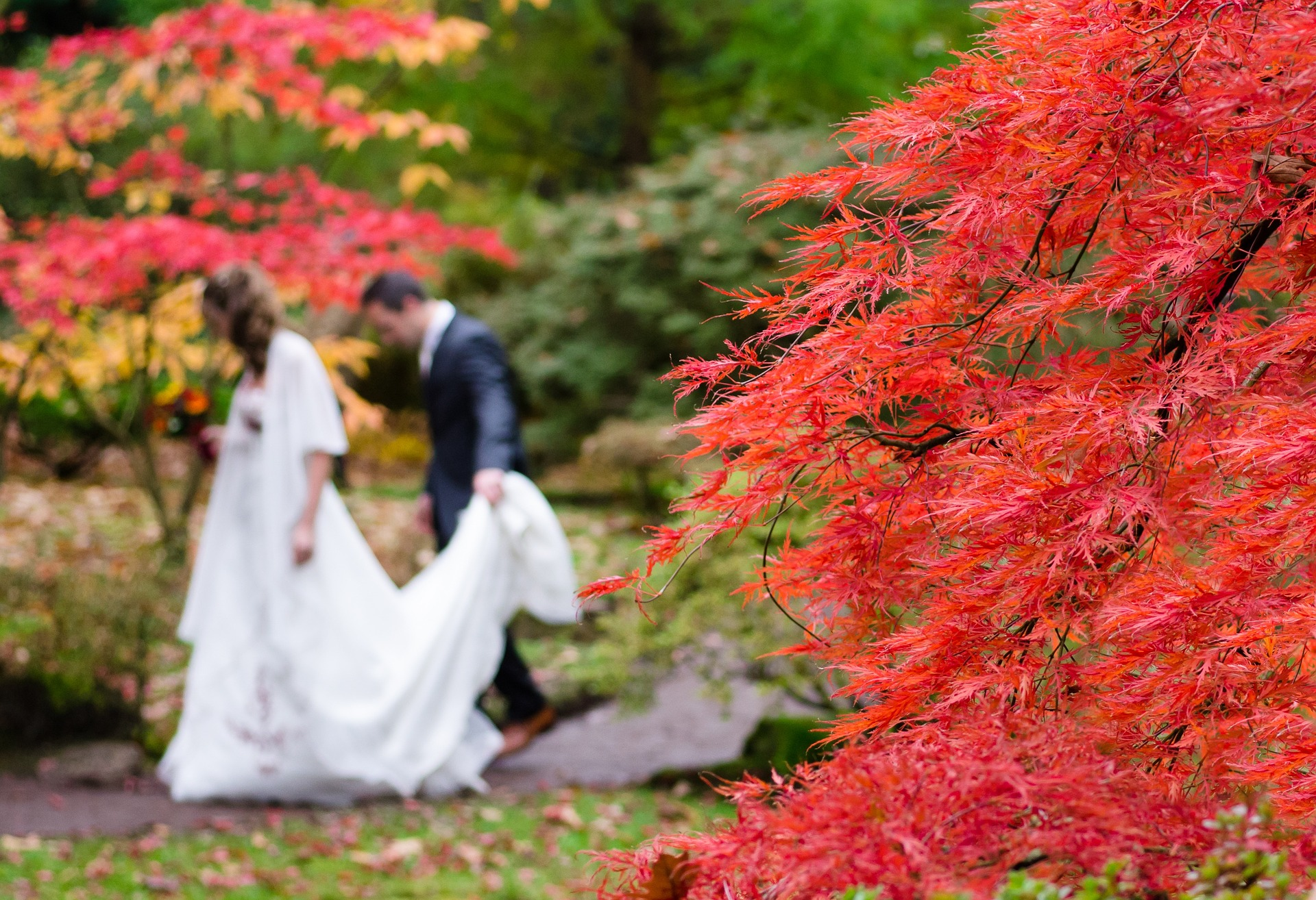 planning a wedding in france - autumn trees
