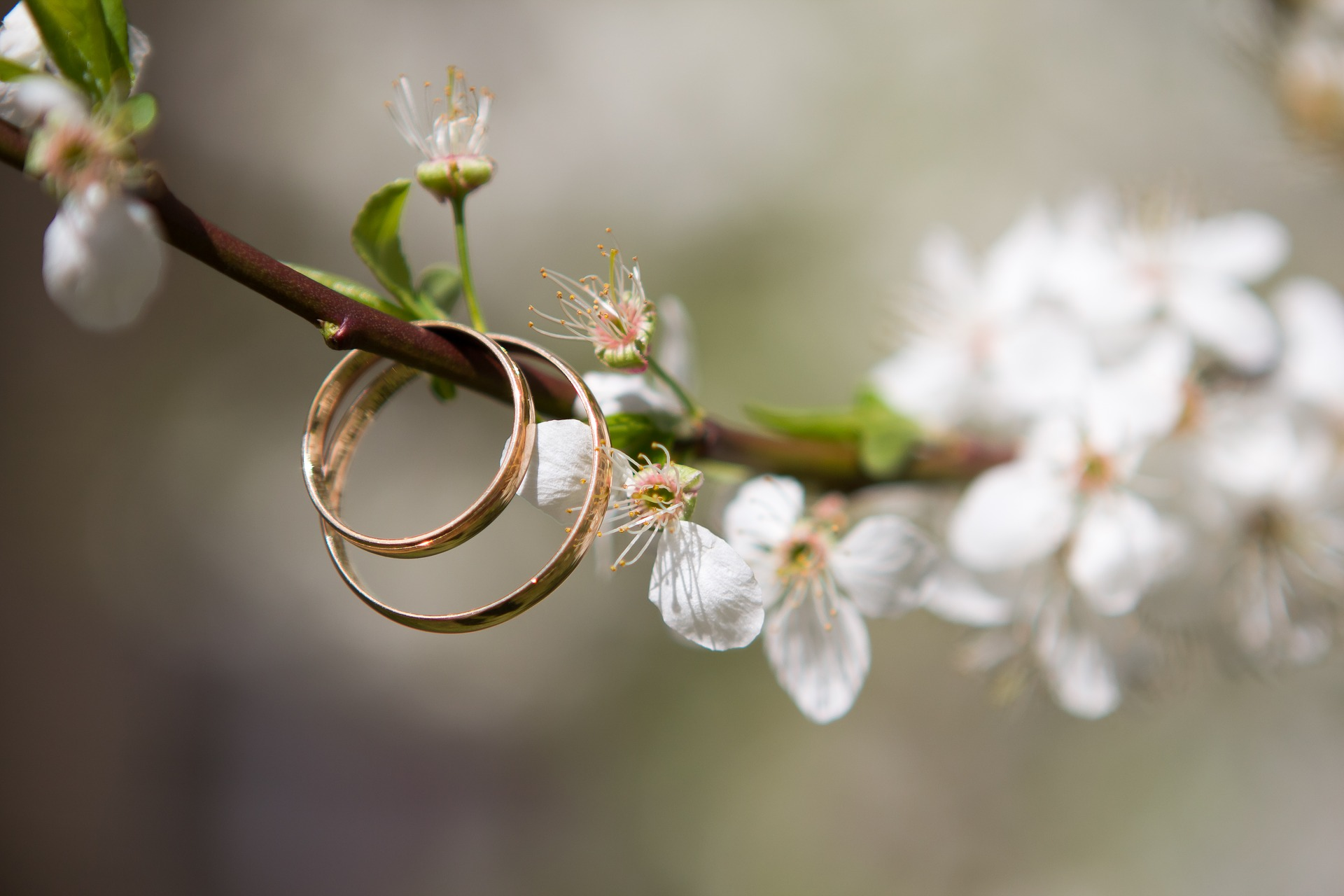 wedding in france - rings on spring blossom